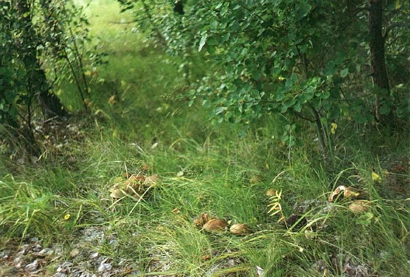 В лесу под Харьковом нашлись две пропавшие девочки